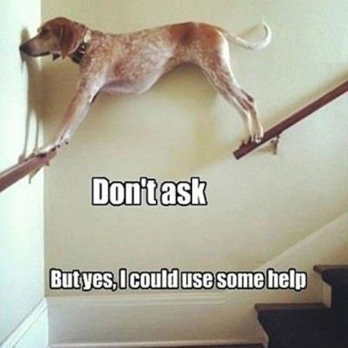 Dog balancing between stairway handrails