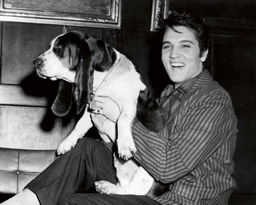 Elvis and his Houndog