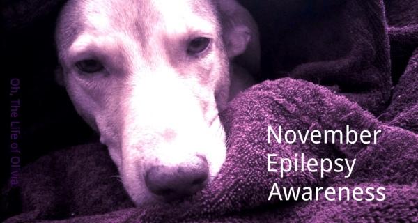 November epilepsy awareness