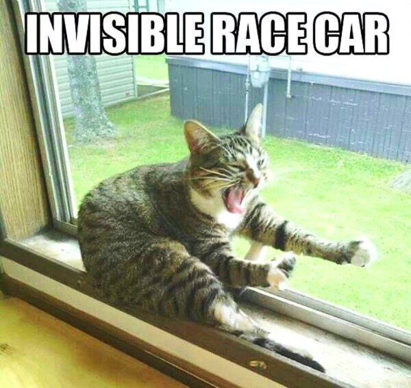 cat driving an invisible race car