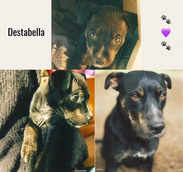 remembering Destabella