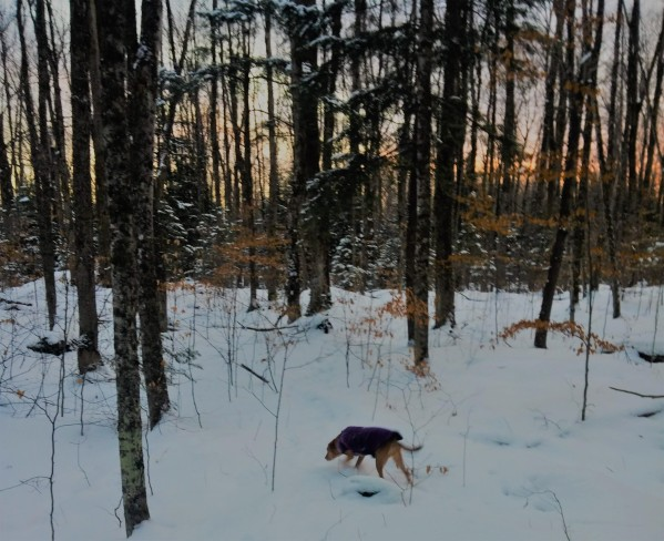 CEO Olivia walking in the winter forest