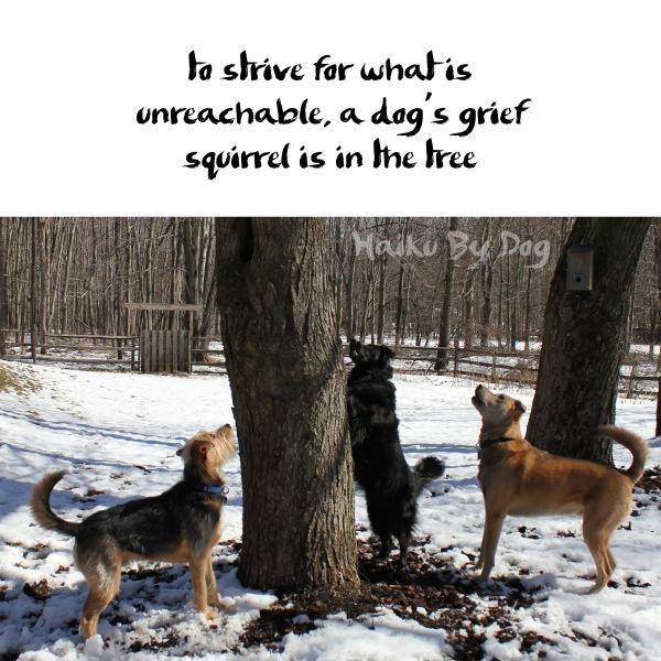A Dog Haiku