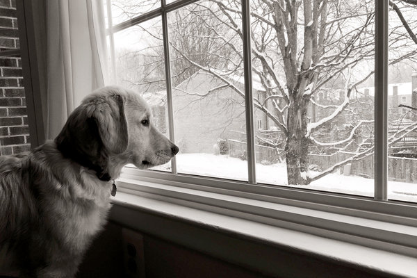 dog looking out a snowy window