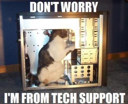cat inside a computer