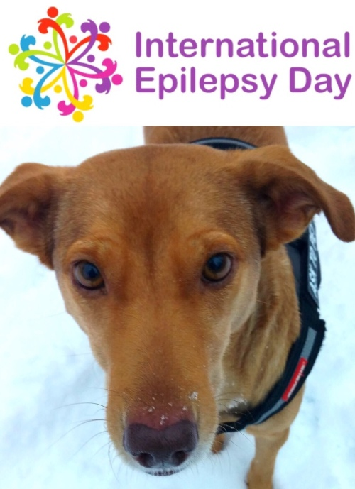 CEO Oliva observes International Epilepsy Day
