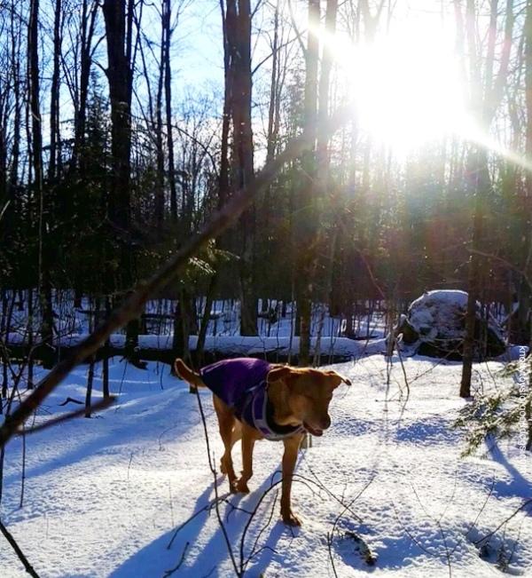 CEO Olivia enjoying some forest sunshine