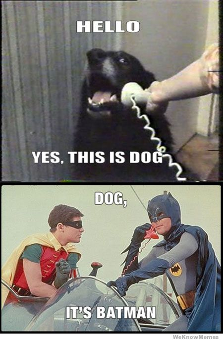 Hello dog meets batman