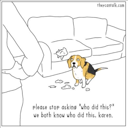 dog talking to Karen